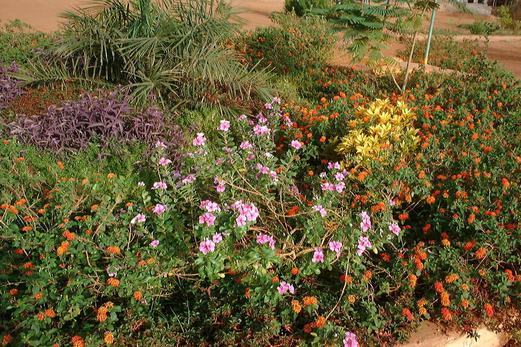 Gardening in Burkina Faso
